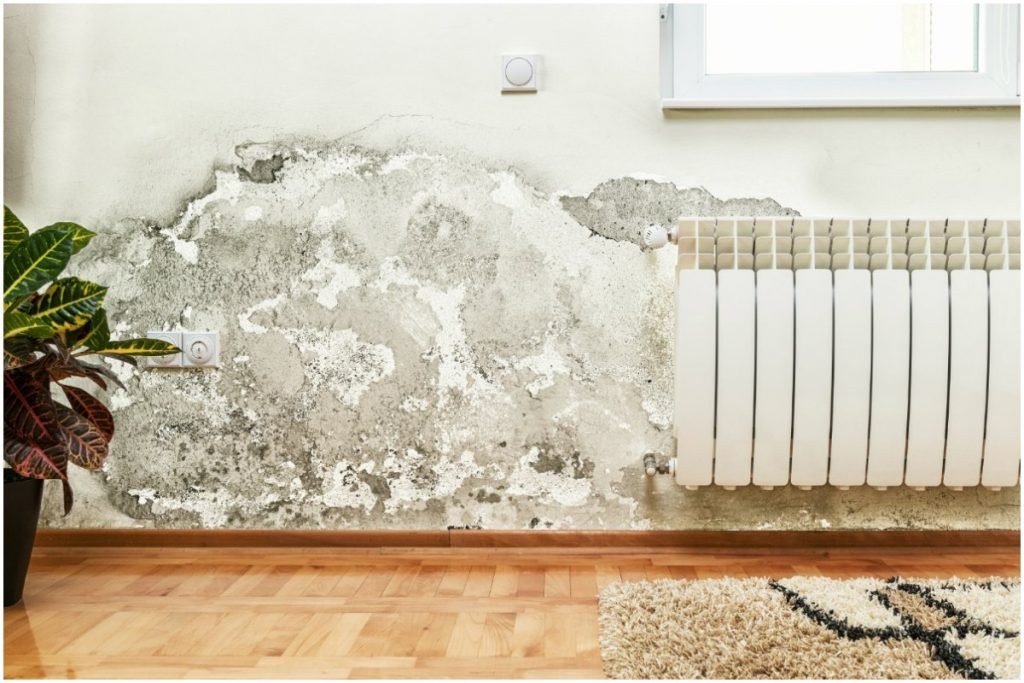 mold-wall-inside-home